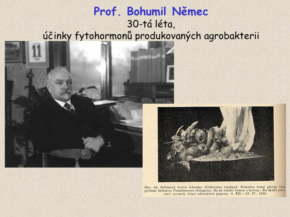 Prof. Bohumil Němec 30-tá léta, účinky fytohormonů produkovaných agrobakterii