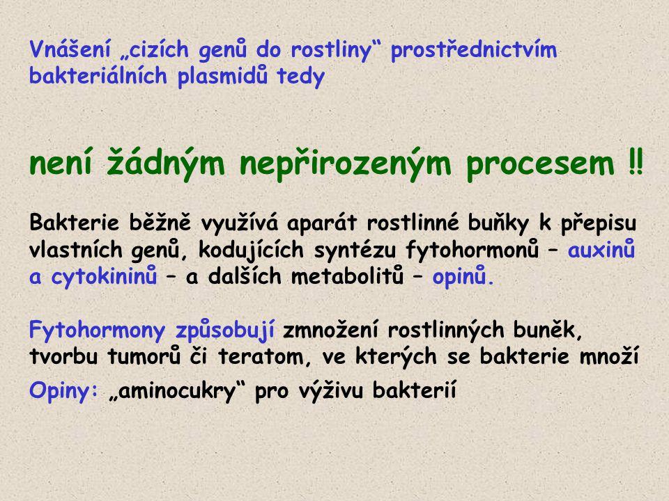 """Vnášení """"cizích genů do rostliny prostřednictvím bakteriálních plasmidů tedy není žádným nepřirozeným procesem !."""