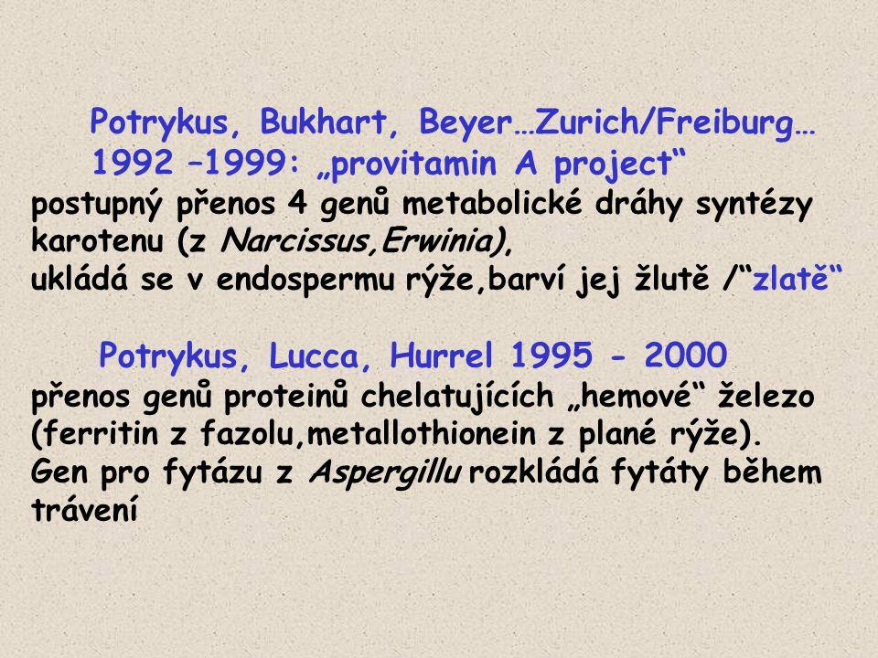 """Potrykus, Bukhart, Beyer…Zurich/Freiburg… 1992 –1999: """"provitamin A project"""" postupný přenos 4 genů metabolické dráhy syntézy karotenu (z Narcissus,Er"""