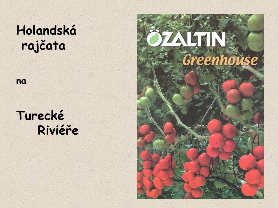 Holandská rajčata na Turecké Riviéře