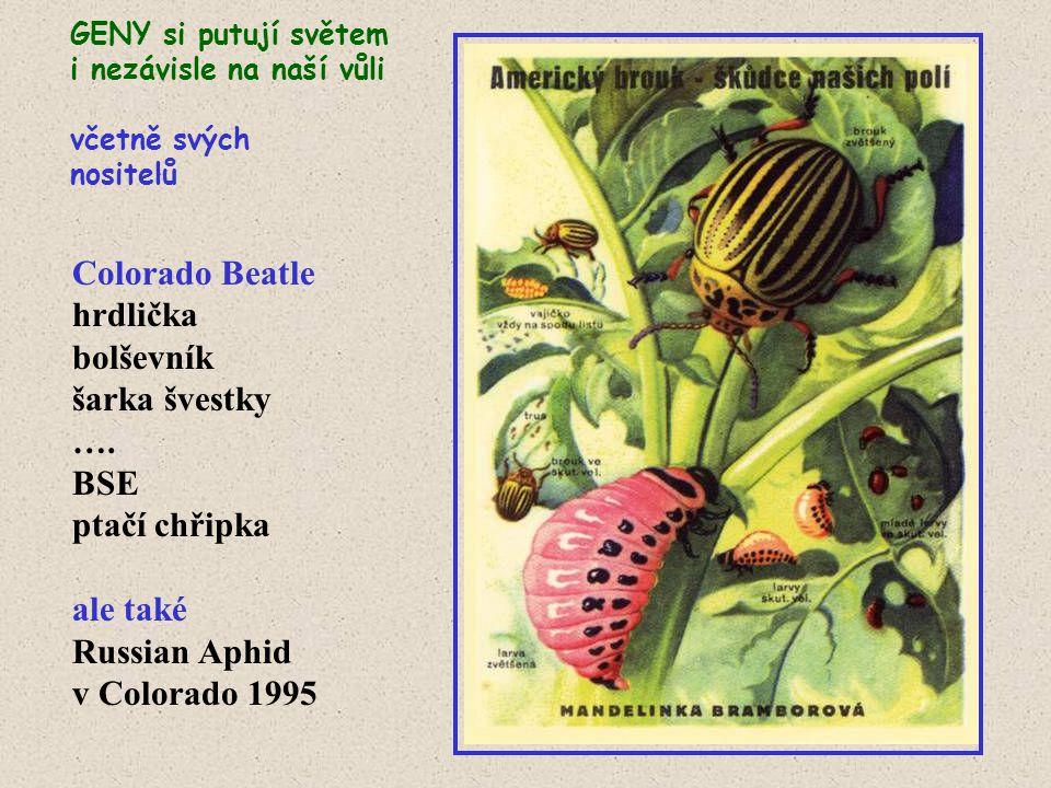 Colorado Beatle hrdlička bolševník šarka švestky …. BSE ptačí chřipka ale také Russian Aphid v Colorado 1995 GENY si putují světem i nezávisle na naší