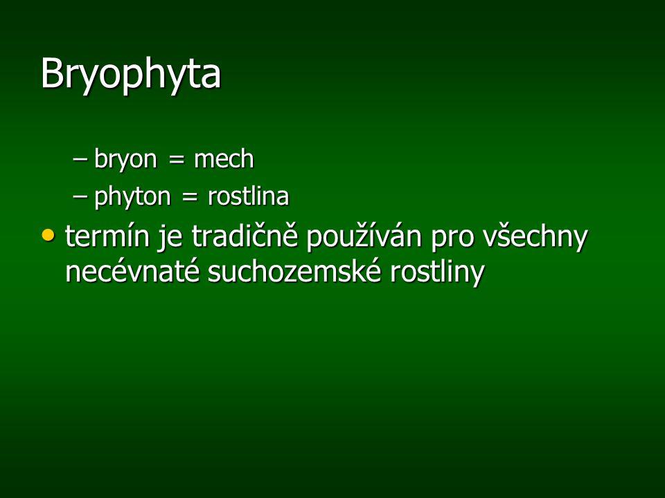 Bryophyta –bryon = mech –phyton = rostlina termín je tradičně používán pro všechny necévnaté suchozemské rostliny termín je tradičně používán pro všec