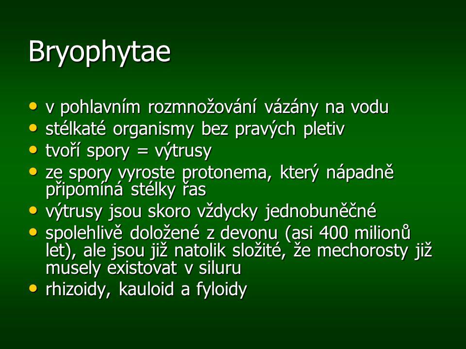 Bryophytae rhizoid = příchytná vlákna odpovídající kořenům rhizoid = příchytná vlákna odpovídající kořenům kauloid = lodyžka kauloid = lodyžka fyloidy = lístky fyloidy = lístky
