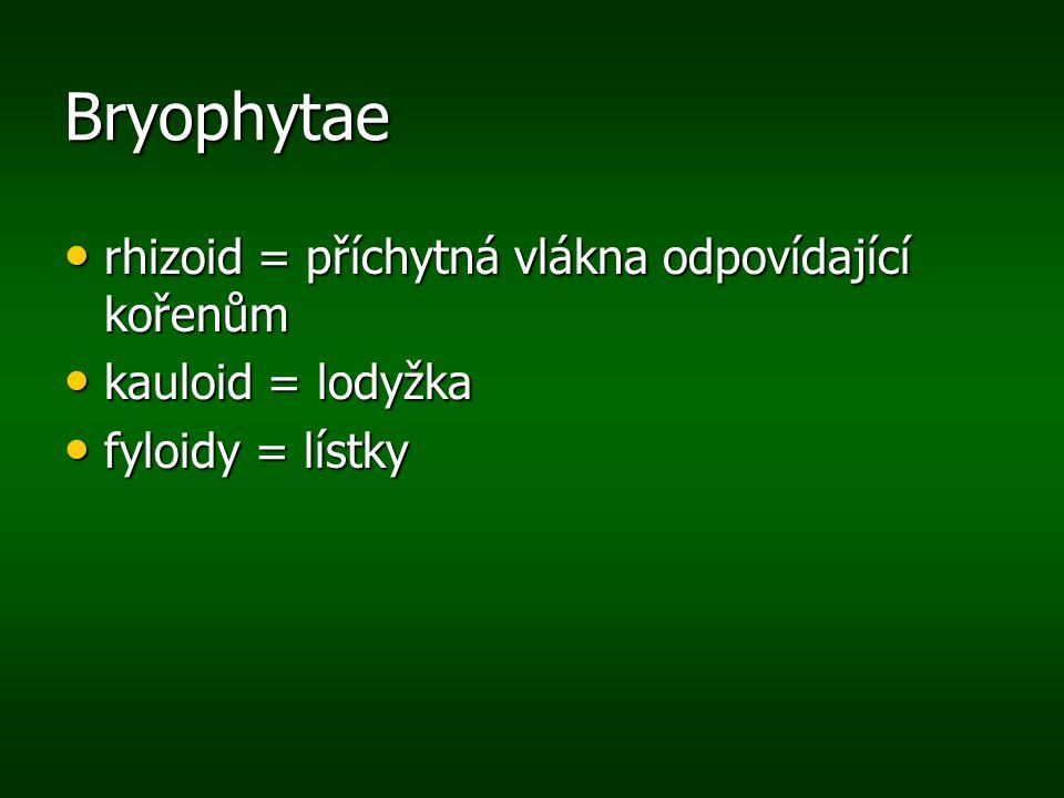 Bryophytae rhizoid = příchytná vlákna odpovídající kořenům rhizoid = příchytná vlákna odpovídající kořenům kauloid = lodyžka kauloid = lodyžka fyloidy
