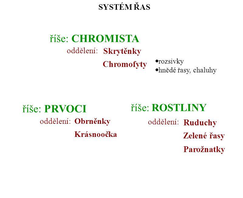 říše: CHROMISTA oddělení: Skrytěnky Chromofyty SYSTÉM ŘAS Krásnoočka říše: PRVOCI oddělení:Obrněnky Zelené řasy říše: ROSTLINY oddělení: Ruduchy Parož