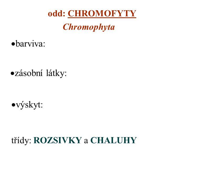 odd: CHROMOFYTY Chromophyta  barviva:  zásobní látky: třídy: ROZSIVKY a CHALUHY  výskyt: