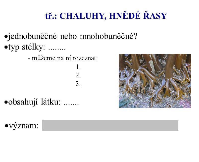 tř.: CHALUHY, HNĚDÉ ŘASY  jednobuněčné nebo mnohobuněčné?  typ stélky:........ - můžeme na ní rozeznat: 1. 2. 3.  obsahují látku:.......  význam: