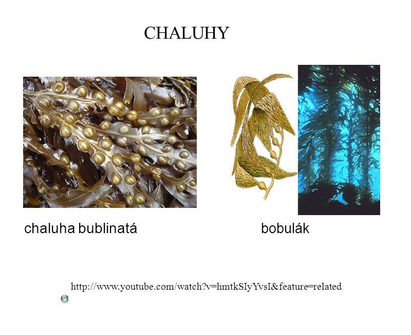 CHALUHY chaluha bublinatá bobulák http://www.youtube.com/watch?v=hmtkSIyYvsI&feature=related