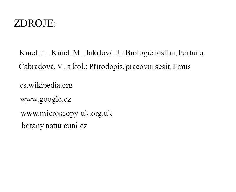 ZDROJE: cs.wikipedia.org www.google.cz www.microscopy-uk.org.uk botany.natur.cuni.cz Kincl, L., Kincl, M., Jakrlová, J.: Biologie rostlin, Fortuna Čab