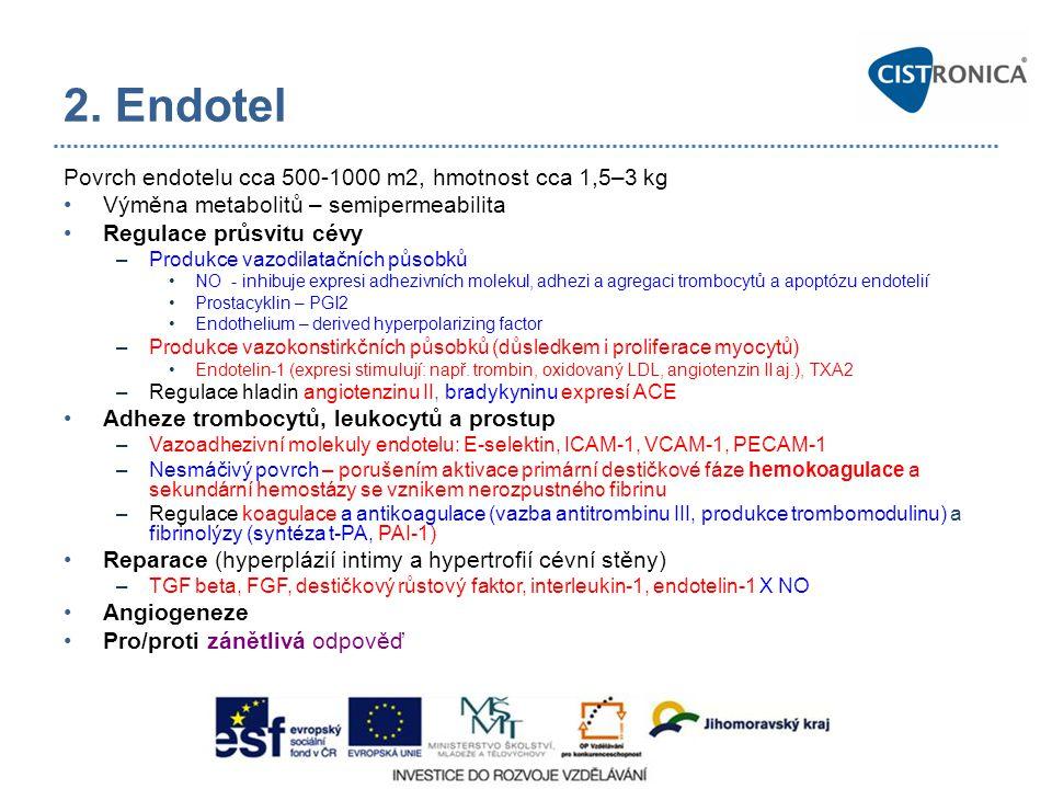 2. Endotel Povrch endotelu cca 500-1000 m2, hmotnost cca 1,5–3 kg Výměna metabolitů – semipermeabilita Regulace průsvitu cévy –Produkce vazodilatačníc
