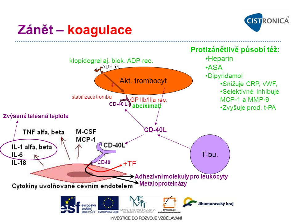 CD-40 L Zánět – koagulace CD40 +TF Akt.trombocyt GP IIb/IIIa rec.