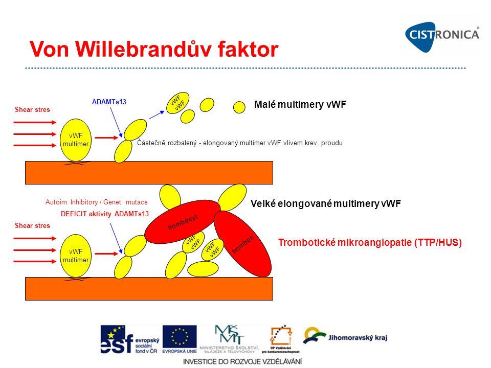 Von Willebrandův faktor vWF multimer vWF Shear stres ADAMTs13 Malé multimery vWF Částečně rozbalený - elongovaný multimer vWF vlivem krev. proudu vWF