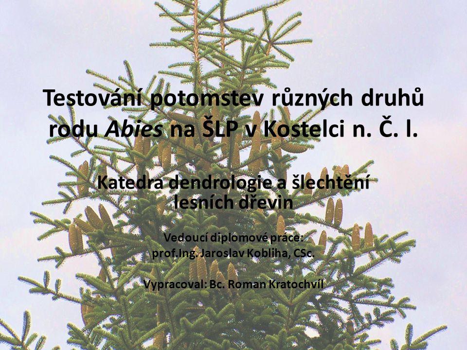 Testování potomstev různých druhů rodu Abies na ŠLP v Kostelci n.