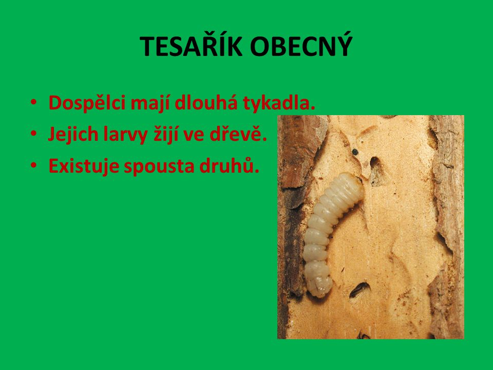 Dospělci mají dlouhá tykadla. Jejich larvy žijí ve dřevě. Existuje spousta druhů.
