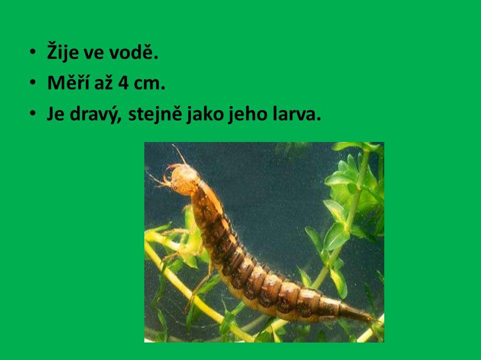 Žije ve vodě. Měří až 4 cm. Je dravý, stejně jako jeho larva.