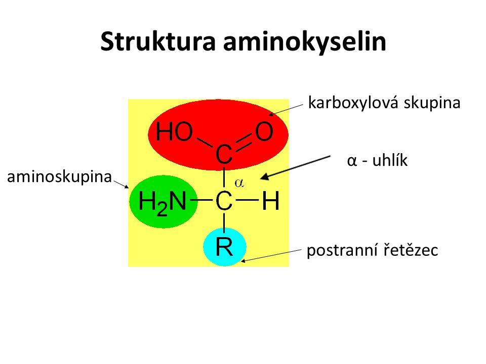 Struktura aminokyselin postranní řetězec aminoskupina karboxylová skupina α - uhlík