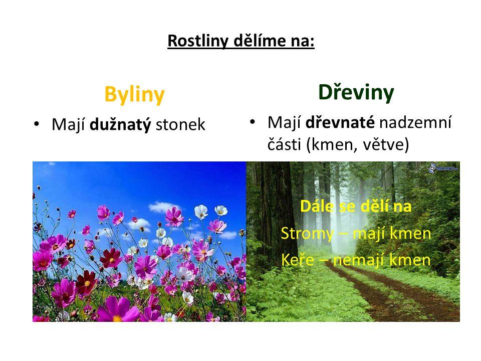 Rostliny dělíme na: Byliny Mají dužnatý stonek Dřeviny Mají dřevnaté nadzemní části (kmen, větve) Dále se dělí na Stromy – mají kmen Keře – nemají kmen