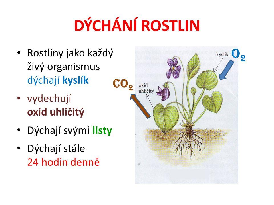 DÝCHÁNÍ ROSTLIN Rostliny jako každý živý organismus dýchají kyslík vydechují oxid uhličitý Dýchají svými listy Dýchají stále 24 hodin denně O2O2 CO 2