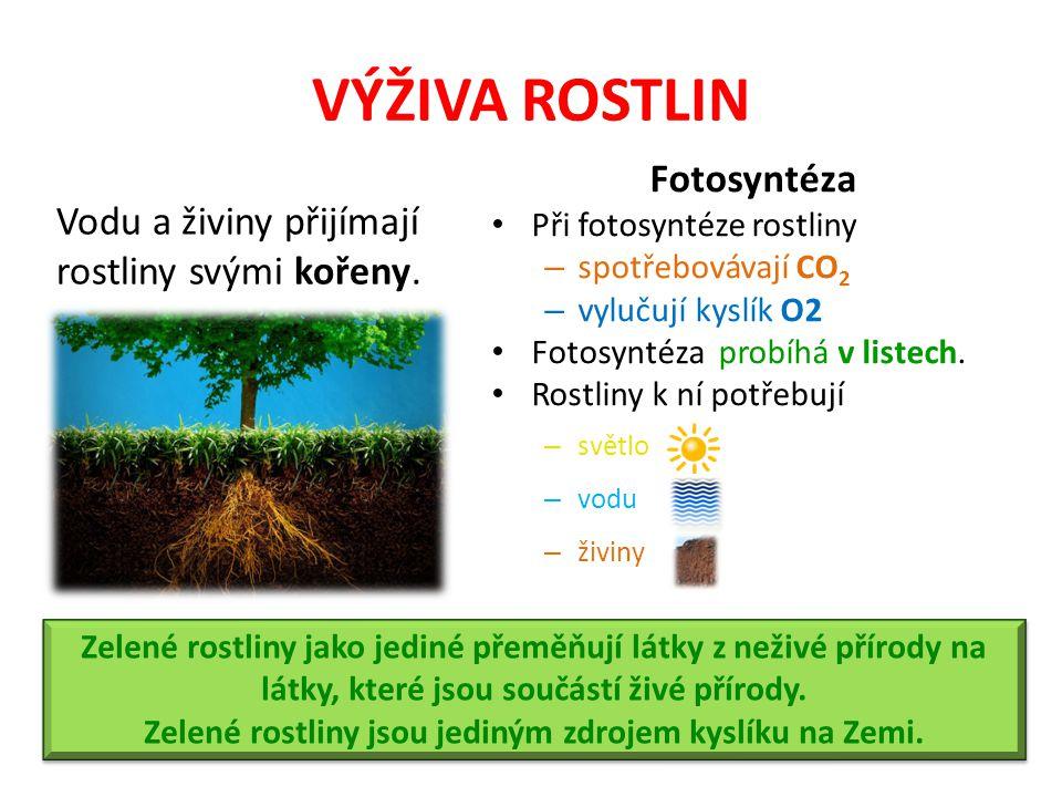 VÝŽIVA ROSTLIN Vodu a živiny přijímají rostliny svými kořeny.
