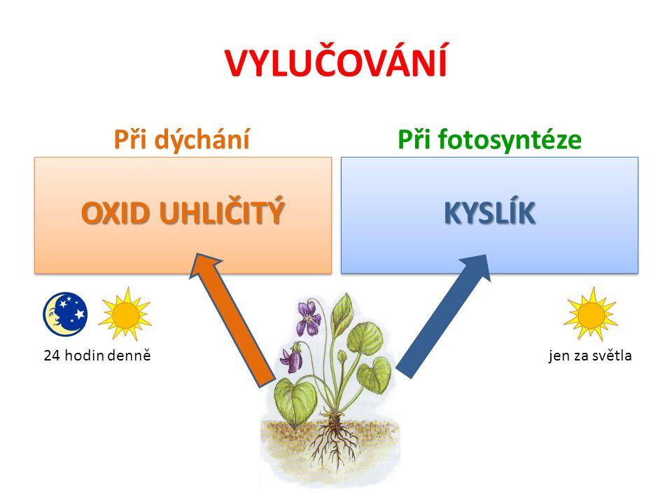 VYLUČOVÁNÍ Při dýchání OXID UHLIČITÝ Při fotosyntéze KYSLÍKKYSLÍK 24 hodin dennějen za světla