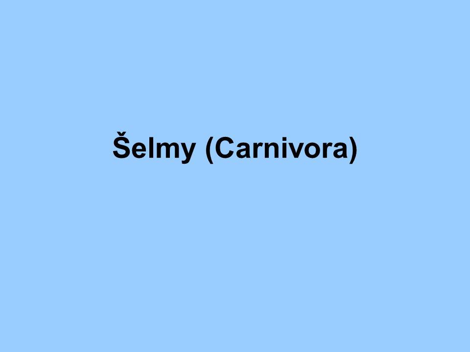 Charakteristika: přizpůsobené životu v různém prostředí na konci potravních řetězců pohyb rychlý a mrštný – lov živé kořisti bystré smysly drápy na nohách mohutné a ostré špičáky trháky – zuby uzpůsobené k ukusování, trhání masa loví většinou za setmění nebo v noci lze dělit na šelmy pozemní a vodní (ploutvonožci)