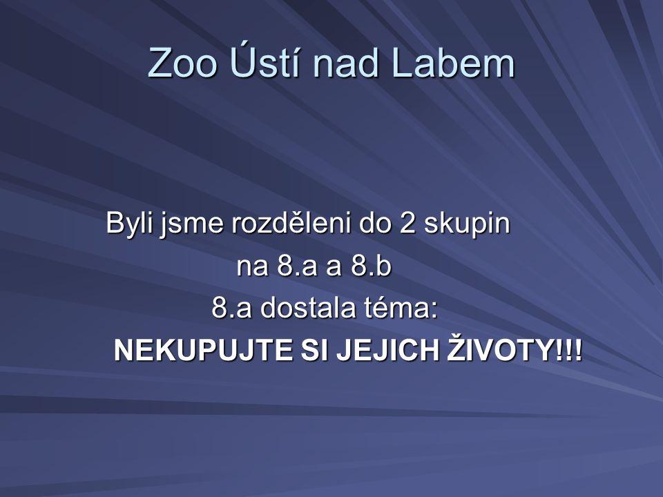 Zoo Ústí nad Labem Byli jsme rozděleni do 2 skupin Byli jsme rozděleni do 2 skupin na 8.a a 8.b na 8.a a 8.b 8.a dostala téma: 8.a dostala téma: NEKUPUJTE SI JEJICH ŽIVOTY!!.