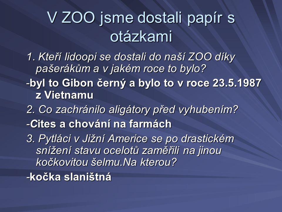 V ZOO jsme dostali papír s otázkami 1. Kteří lidoopi se dostali do naší ZOO díky pašerákům a v jakém roce to bylo? 1. Kteří lidoopi se dostali do naší