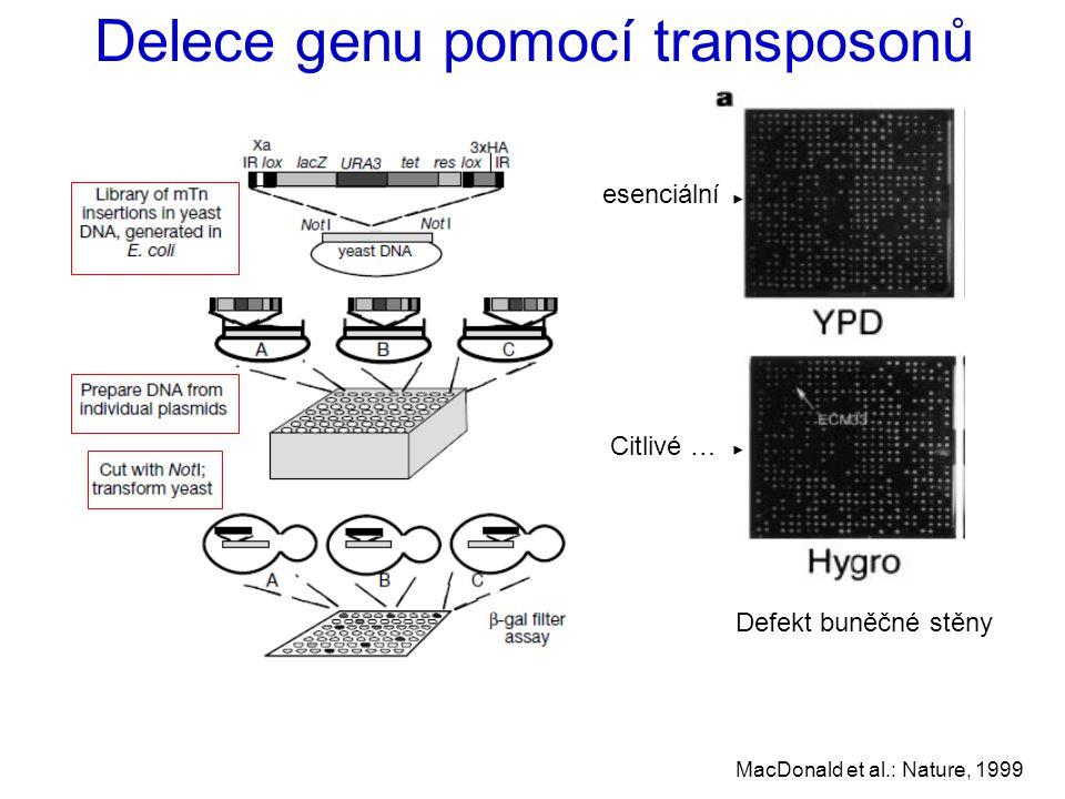 Delece genu pomocí transposonů Defekt buněčné stěny MacDonald et al.: Nature, 1999 esenciální Citlivé …