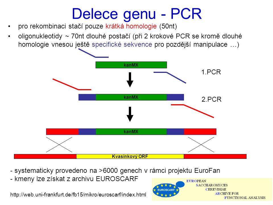 Delece genu - PCR pro rekombinaci stačí pouze krátká homologie (50nt) oligonukleotidy ~ 70nt dlouhé postačí (při 2 krokové PCR se kromě dlouhé homologie vnesou ještě specifické sekvence pro pozdější manipulace …) kanMX 1.PCR 2.PCR Kvasinkový ORF - systematicky provedeno na >6000 genech v rámci projektu EuroFan - kmeny lze získat z archivu EUROSCARF http://web.uni-frankfurt.de/fb15/mikro/euroscarf/index.html