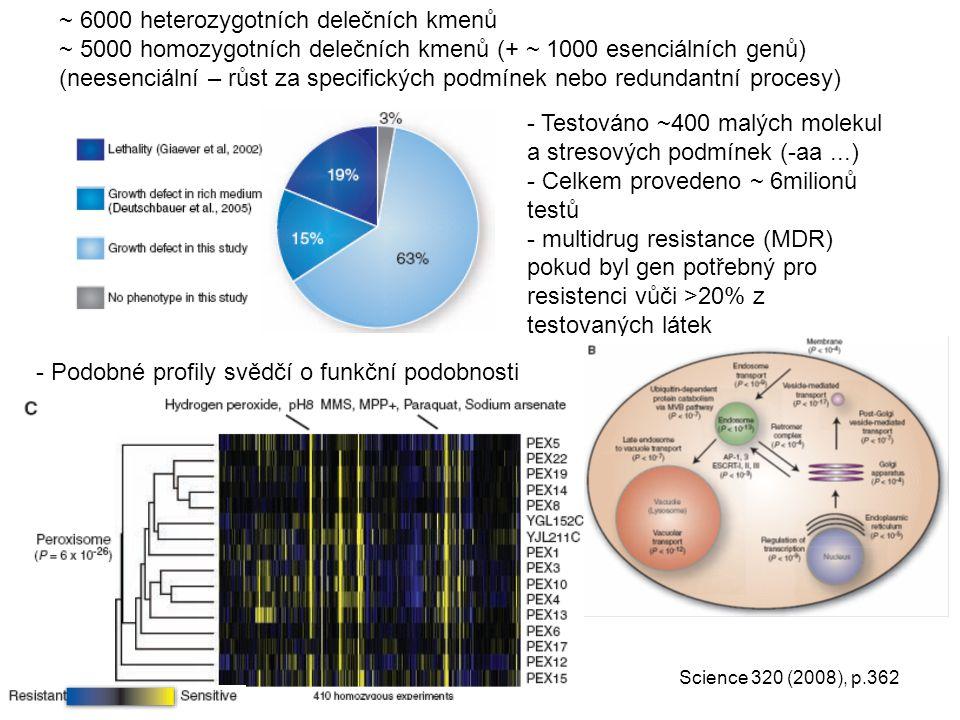~ 6000 heterozygotních delečních kmenů ~ 5000 homozygotních delečních kmenů (+ ~ 1000 esenciálních genů) (neesenciální – růst za specifických podmínek nebo redundantní procesy) - Testováno ~400 malých molekul a stresových podmínek (-aa...) - Celkem provedeno ~ 6milionů testů - multidrug resistance (MDR) pokud byl gen potřebný pro resistenci vůči >20% z testovaných látek - Podobné profily svědčí o funkční podobnosti Science 320 (2008), p.362