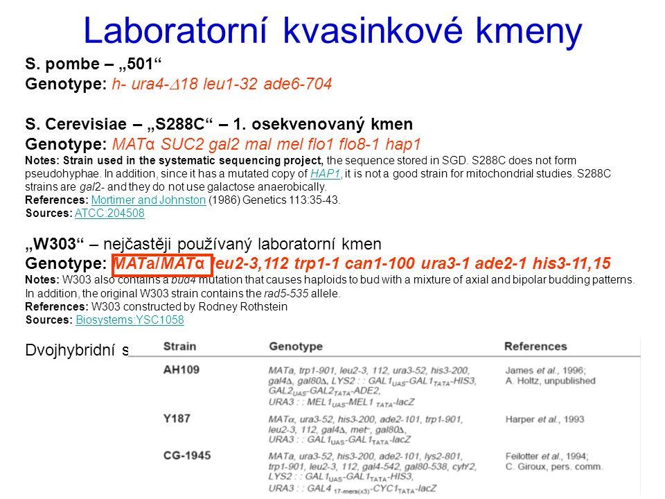 """Laboratorní kvasinkové kmeny S.pombe – """"501 Genotype: h- ura4-  18 leu1-32 ade6-704 S."""