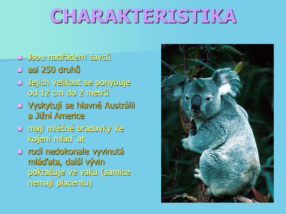 CHARAKTERISTIKA Jsou nadřádem savců Jsou nadřádem savců asi 250 druhů asi 250 druhů Jejich velikost se pohybuje od 12 cm do 2 metrů Jejich velikost se