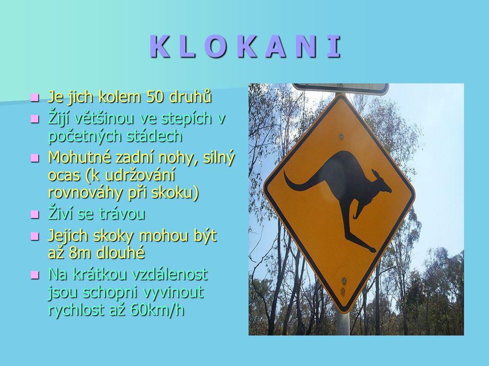 K L O K A N I Je jich kolem 50 druhů Je jich kolem 50 druhů Žijí většinou ve stepích v početných stádech Žijí většinou ve stepích v početných stádech