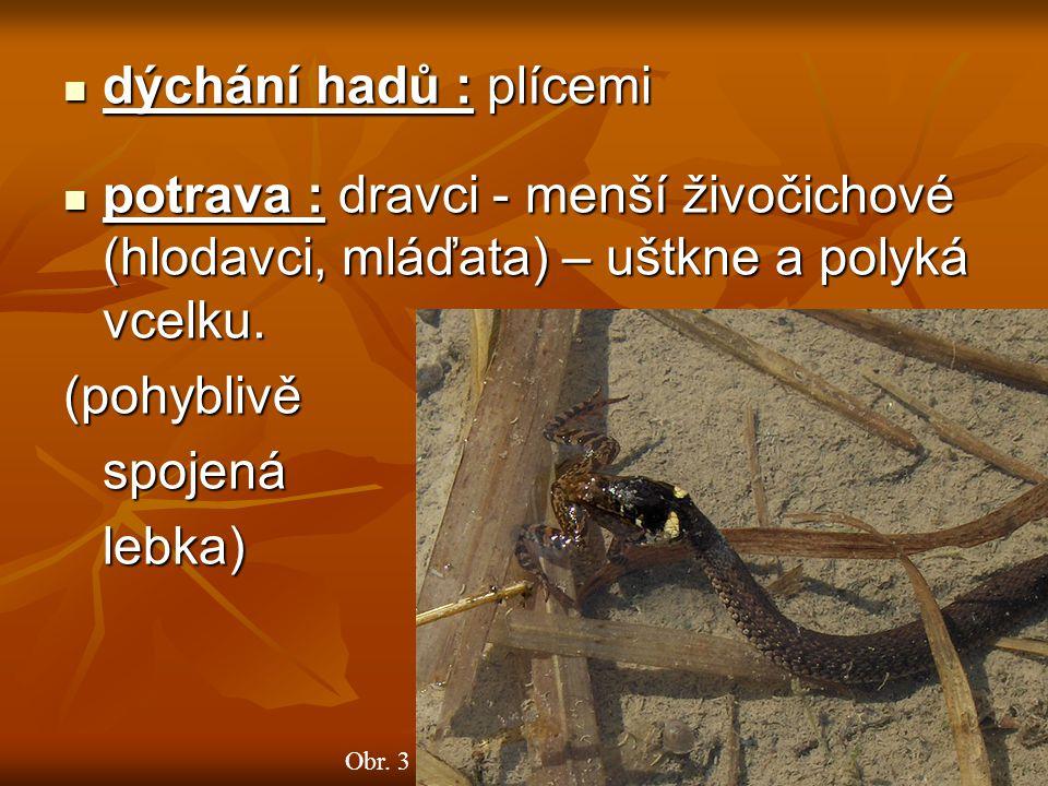 dýchání hadů : plícemi dýchání hadů : plícemi potrava : dravci - menší živočichové (hlodavci, mláďata) – uštkne a polyká vcelku.