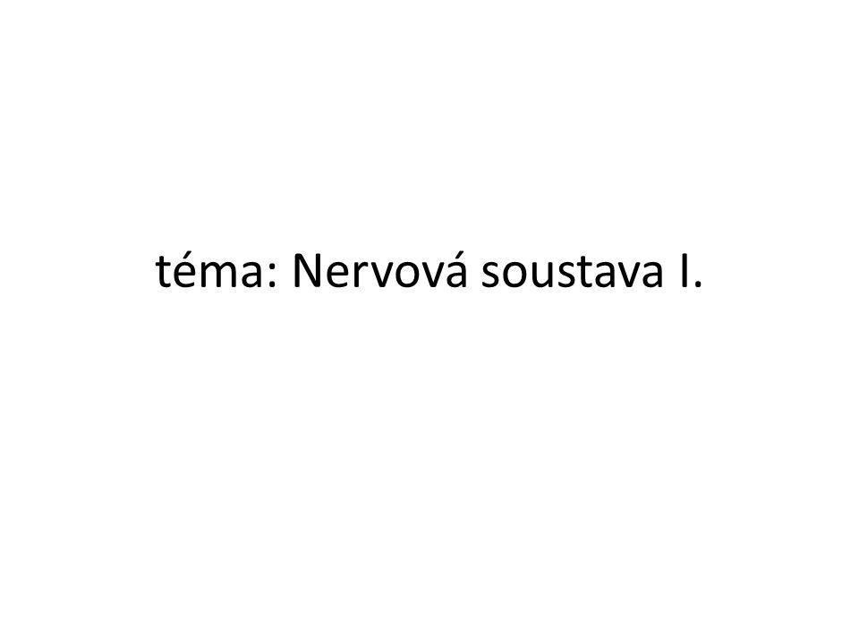téma: Nervová soustava I.