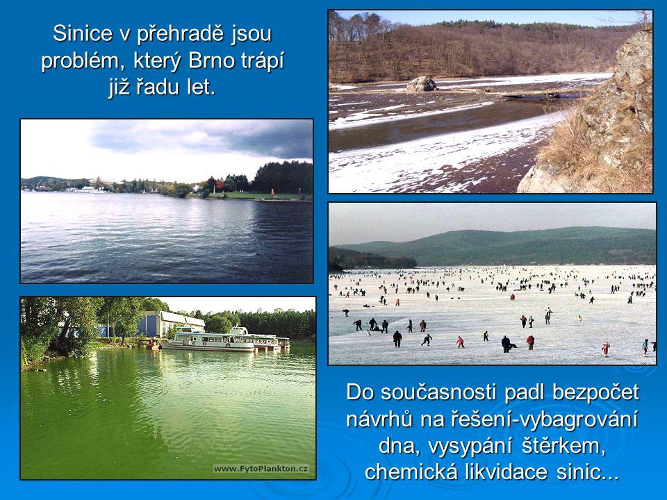 Sinice v přehradě jsou problém, který Brno trápí již řadu let.