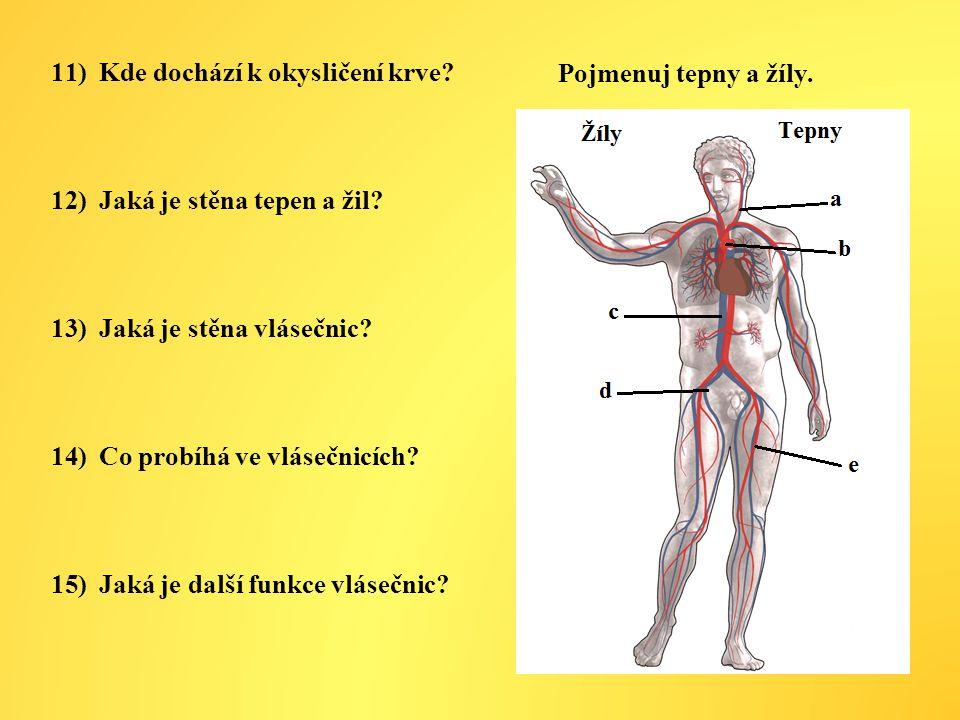 11)Kde dochází k okysličení krve.12)Jaká je stěna tepen a žil.