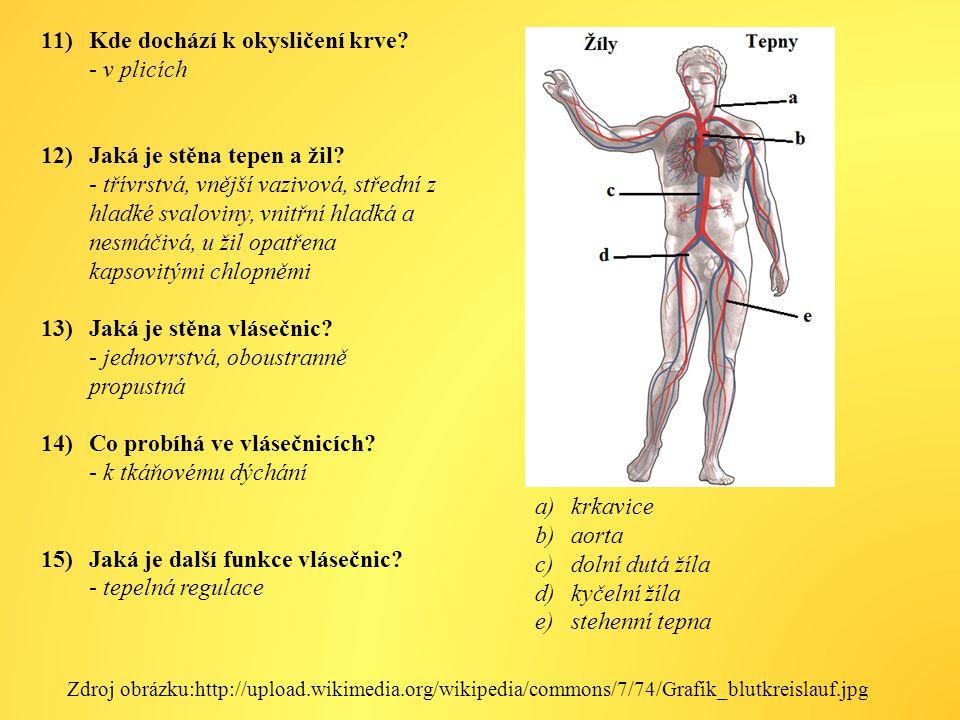 11)Kde dochází k okysličení krve.- v plicích 12)Jaká je stěna tepen a žil.