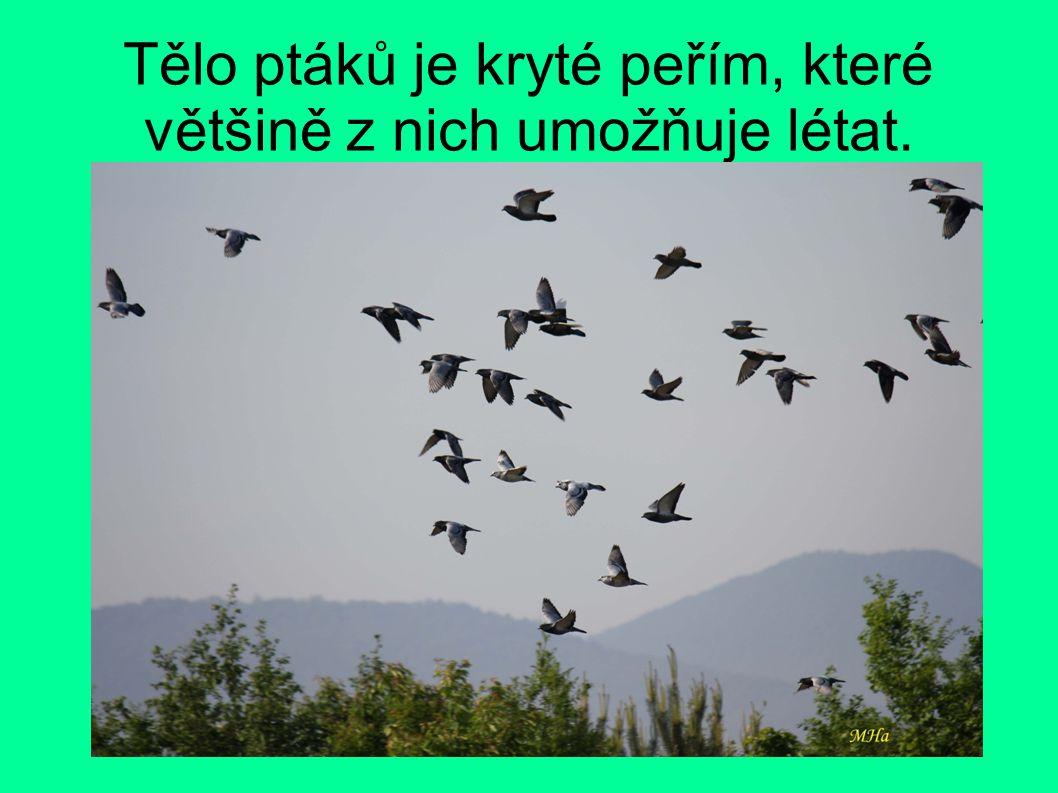 Tělo ptáků je kryté peřím, které většině z nich umožňuje létat.