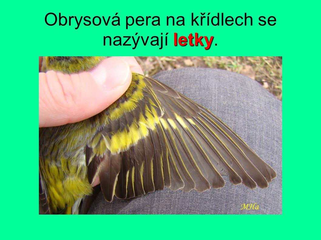 letky Obrysová pera na křídlech se nazývají letky.
