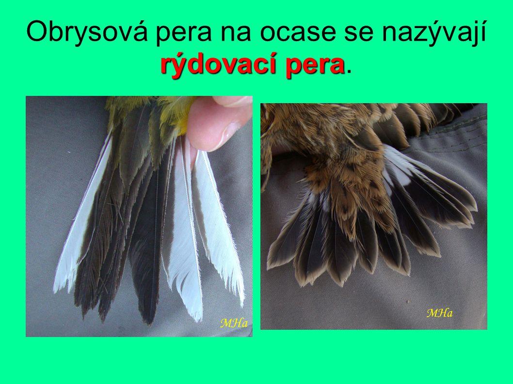 rýdovací pera Obrysová pera na ocase se nazývají rýdovací pera.