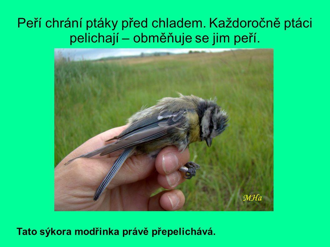 Peří chrání ptáky před chladem.Každoročně ptáci pelichají – obměňuje se jim peří.