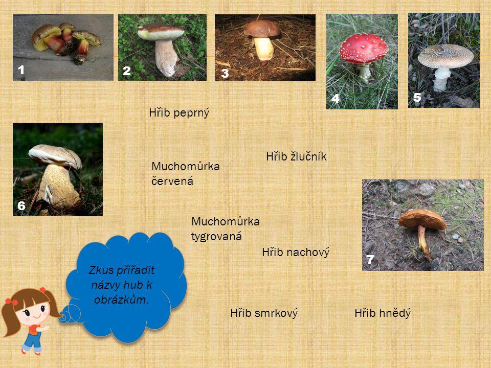Zkus přiřadit názvy hub k obrázkům.