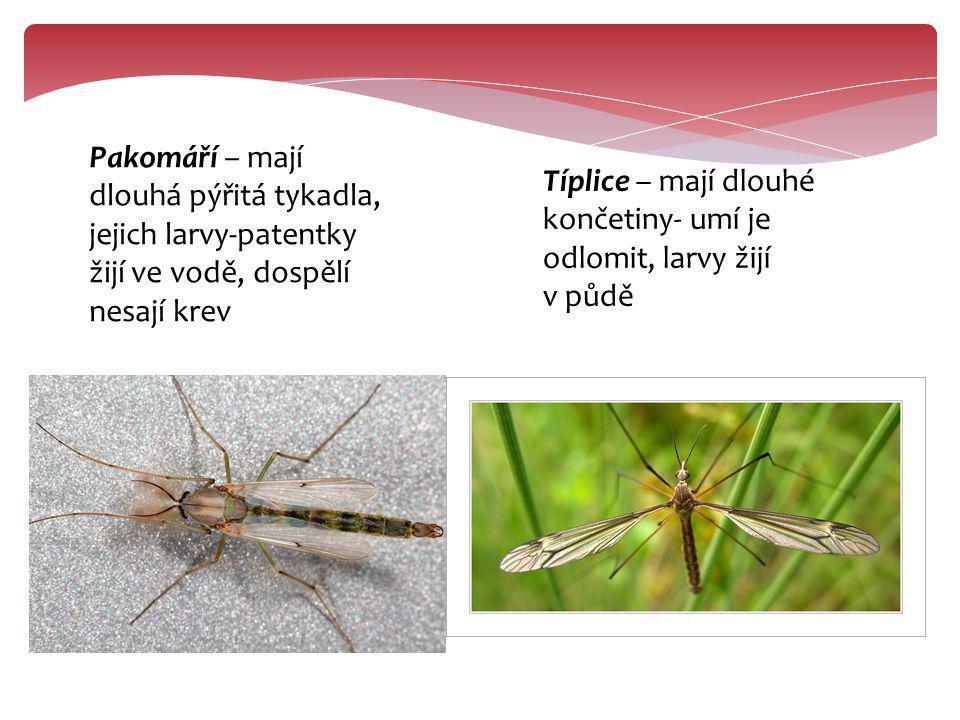 Pakomáří – mají dlouhá pýřitá tykadla, jejich larvy-patentky žijí ve vodě, dospělí nesají krev Típlice – mají dlouhé končetiny- umí je odlomit, larvy