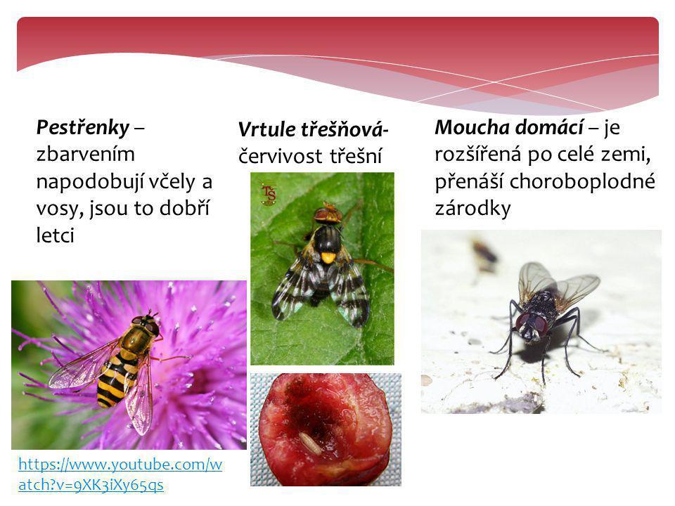 Pestřenky – zbarvením napodobují včely a vosy, jsou to dobří letci Vrtule třešňová- červivost třešní Moucha domácí – je rozšířená po celé zemi, přenáš
