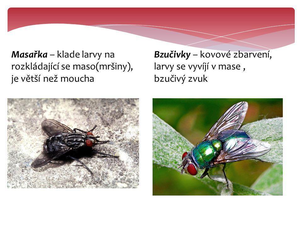 Octomilka obecná – vyskytují se v blízkosti kvasících látek Bodalka tse-tse – žije v tropech a je přenašečkou prvoka způsobující spavou nemoc Střeček – rychlý letec, obávaný parazit zvířat, jeho larvy žijí pod kůží a tvoří boláky https://www.youtube.com/watc h?v=-elOZe7kxWk https://www.youtube.com /watch?v=4aVUrGO97Zg