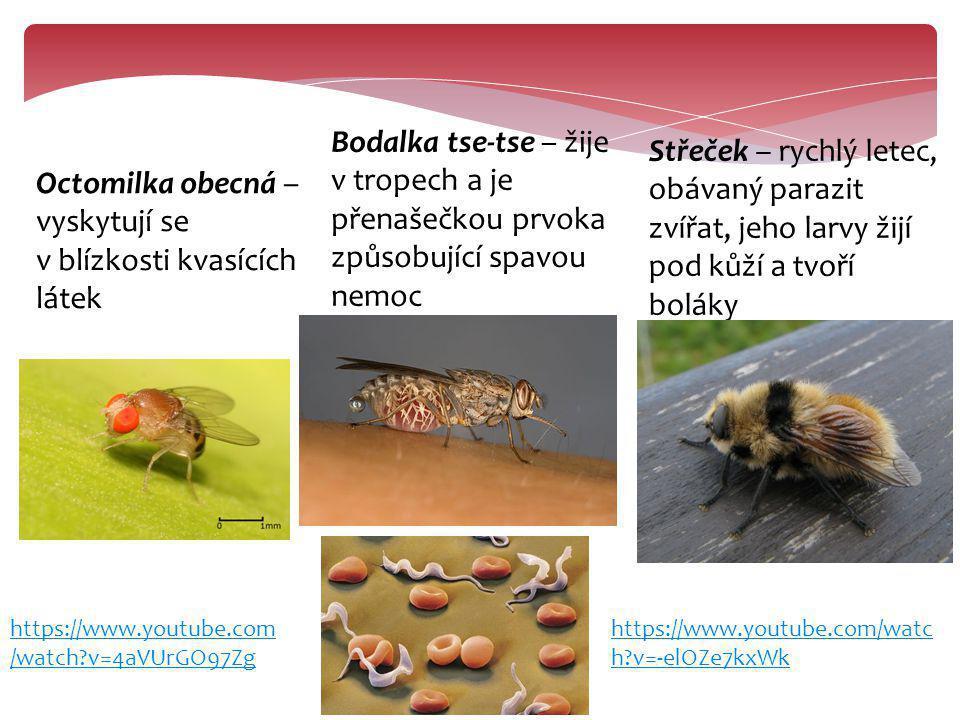 Octomilka obecná – vyskytují se v blízkosti kvasících látek Bodalka tse-tse – žije v tropech a je přenašečkou prvoka způsobující spavou nemoc Střeček