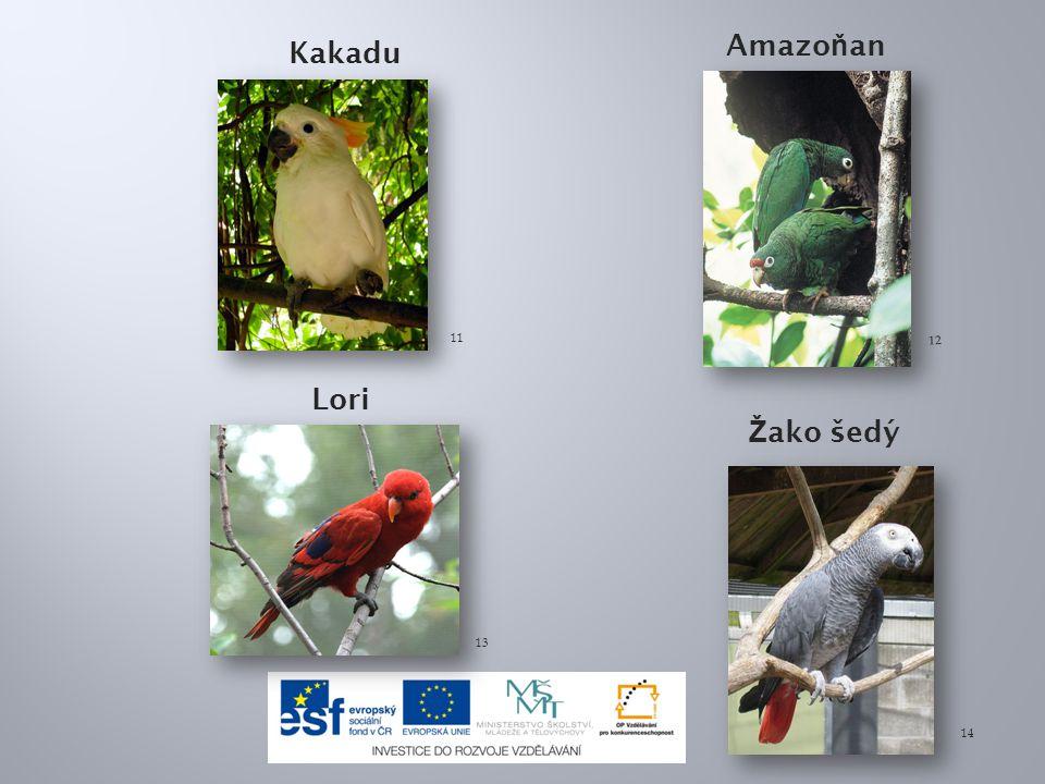 Hnízdní parazitismus znamená : a)ptáci využívají hnízda kukaček b)kukačky využívají hnízda jiných ptáků c)kukačky krmí cizí mláďata