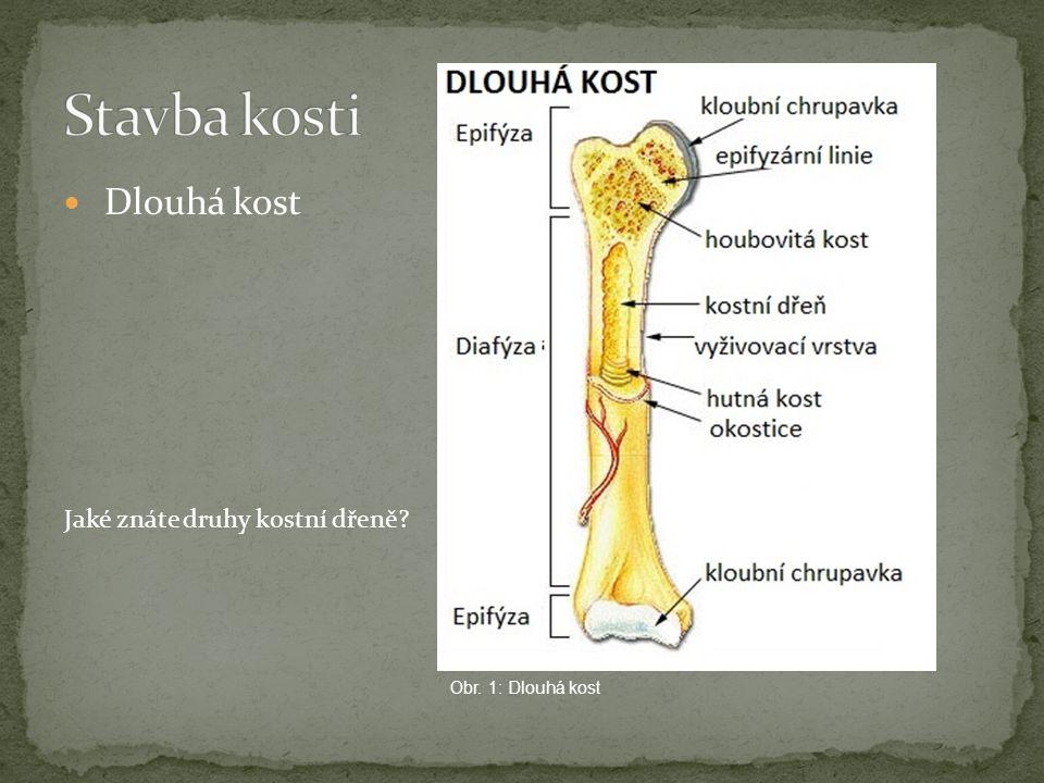 Dlouhá kost Obr. 1: Dlouhá kost Jaké znáte druhy kostní dřeně?