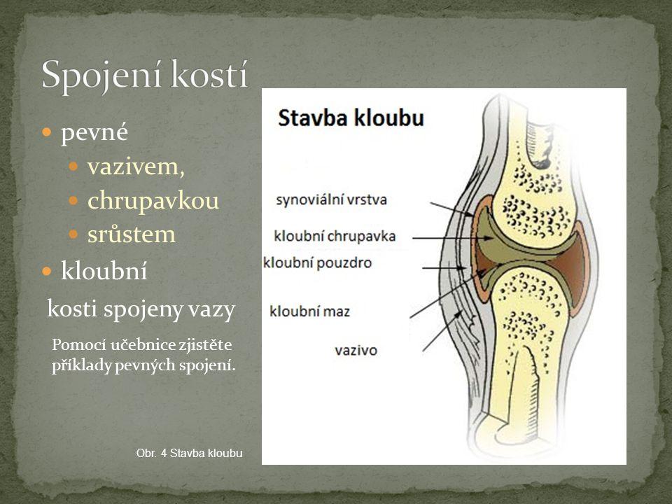 pevné vazivem, chrupavkou srůstem kloubní kosti spojeny vazy Obr. 4 Stavba kloubu Pomocí učebnice zjistěte příklady pevných spojení.
